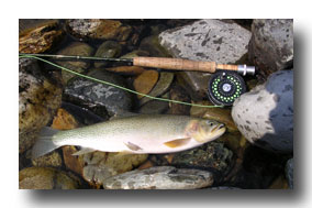 St Mary River cutthroat 2